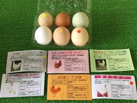 五泉市産みたて卵のキムラファーム色とりどり卵説明書付き